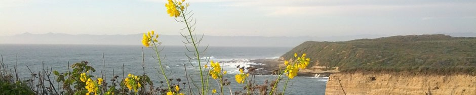 coastline with flowers in foreground